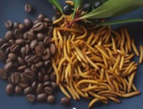 Turning waste into animal food