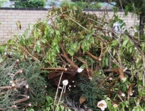 About Green Waste